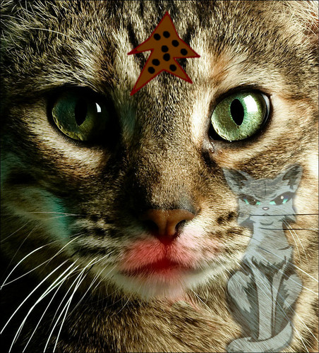 World of Warriors wallpaper with a tabby and a tabby titled Cookiestar killed Bluestar
