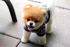Boo-Cutest Dog