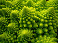 Natural Fractal - green photo