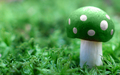 Green Mushroom - green wallpaper