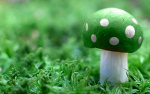 Green jamur