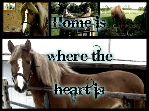 Heartland 壁紙 with a horse trail, a steeplechaser, and a horse wrangler entitled my best friend gem