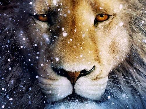 Lions پیپر وال titled \\lions//