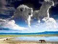 lions                 - lions photo