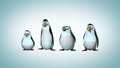 The Penguins Of Madagascar - penguins-of-madagascar wallpaper
