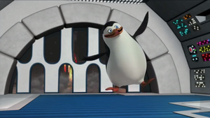 Private pinguin, penguin