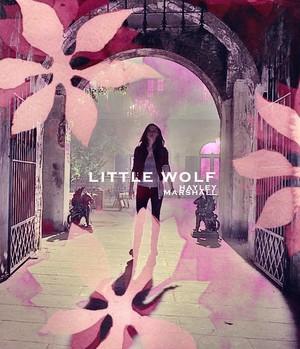 Little بھیڑیا
