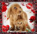 puppy and kitten v day - the-vampire-diaries photo