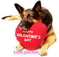 v day cute dog - the-vampire-diaries fan art