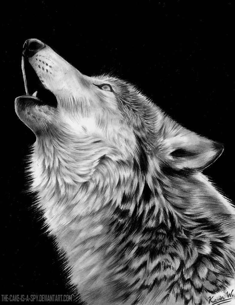 Awesome Wolf Howling