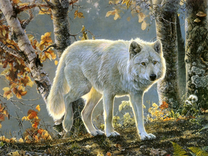 Beautiful White serigala, wolf