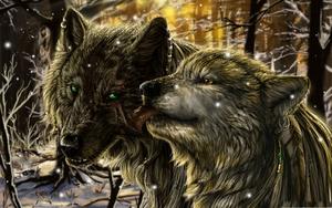 Awe serigala, wolf Cinta <33333