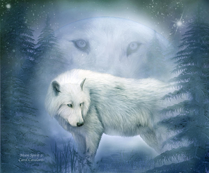 An Awesome white wolf edit! <3