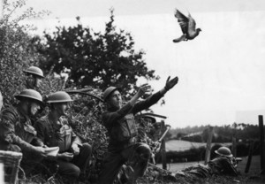 Cher Ami, WW1 Carrier Pigeon
