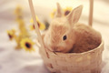 Bunny         - animals wallpaper