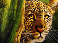 Leopard     - animals wallpaper