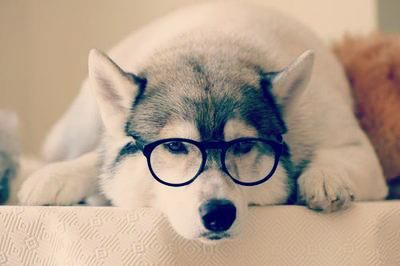 जानवर वॉलपेपर titled Dog with glasses