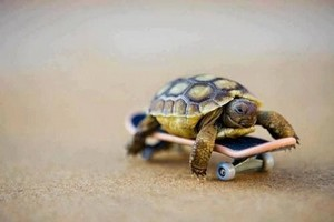 tortue riding a skateboard