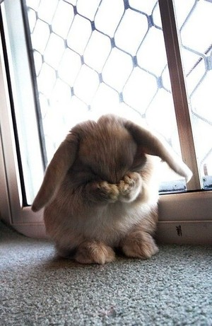 Rabbit crying