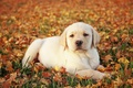 Cute Puppy - animals photo