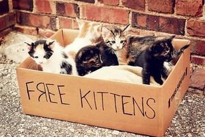 고양이 in a box