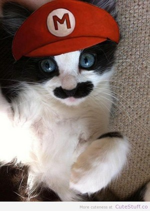 Cat in Super Mario costume