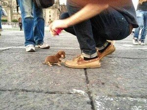 Little tiny baby puppy!