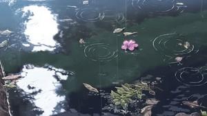 Makoto Shinkai- Garden of Words