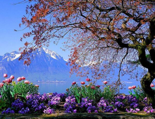 Beautiful landscapes images lake geneva switzerland wallpaper and background photos 36789068 - Beautiful image ...