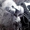 Billy Idol From Whiplash Smile 1986 Wallpaper