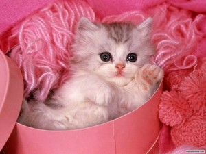 Kitten pretty in pink!
