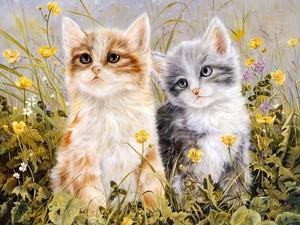 Spring kittens.