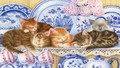 Kittens Sleeping with dishes! - cats wallpaper