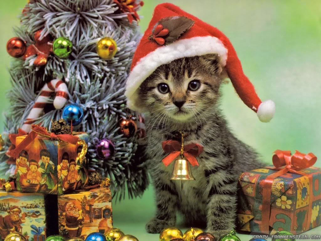 Cats Images Christmas Kitten Hd Wallpaper And Background Photos