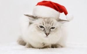 Natale Cat