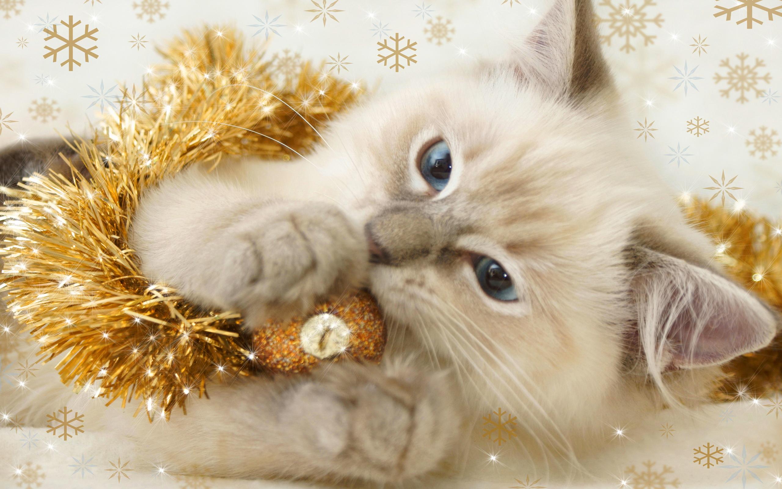 Christmas Kitten. - Cats Wallpaper (36711894) - Fanpop
