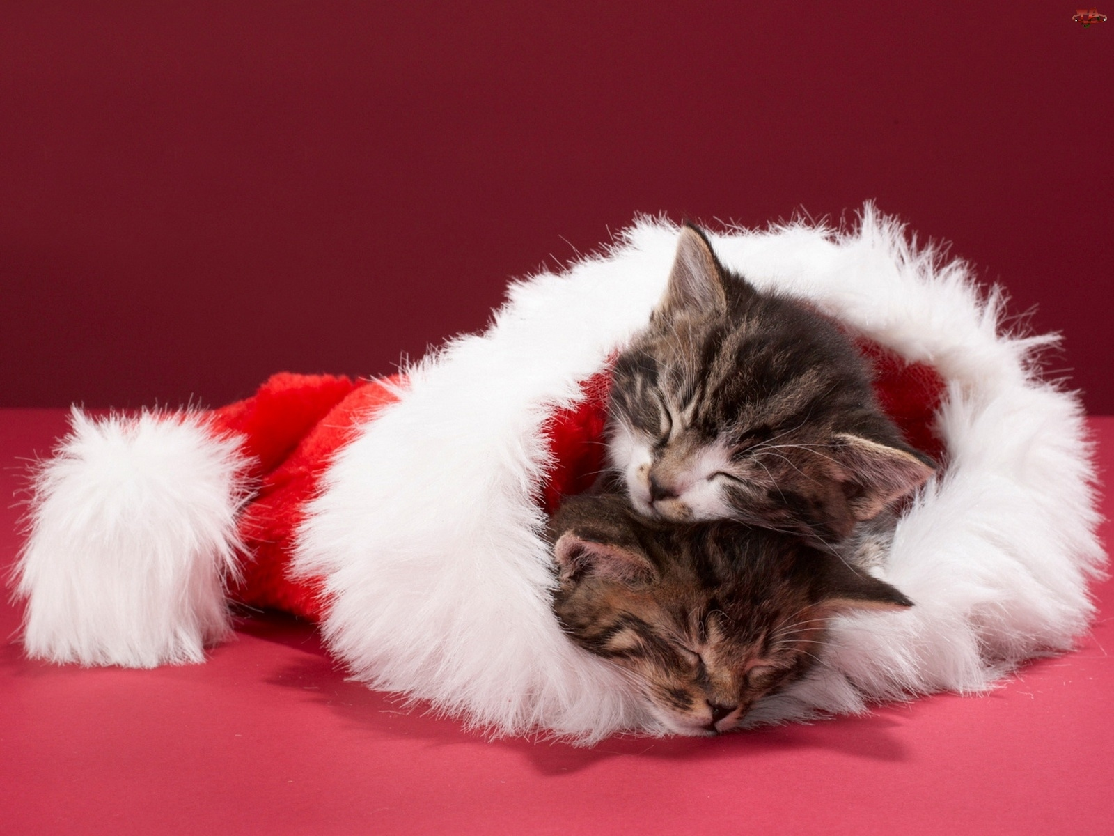 cats images christmas kittens hd wallpaper and background