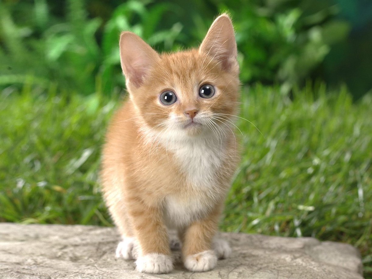cute little kitten cats photo 36712791 fanpop