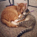 An Unlikely Friendship - cats photo