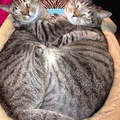Kitty Hugs - cats photo