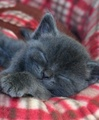 Catnapping - cats photo