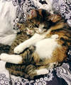 Two Cats Cuddling Together - cats photo