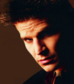 BtVS // S02. - david-boreanaz photo
