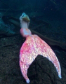 mermaid <3 - fantasy photo