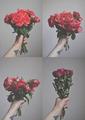flowers      - flowers photo