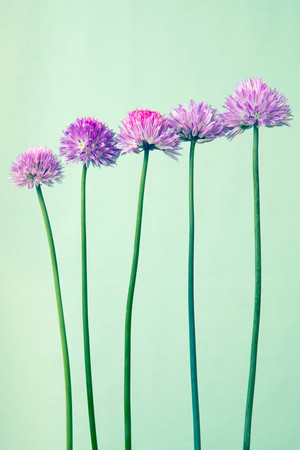 Pastel flores