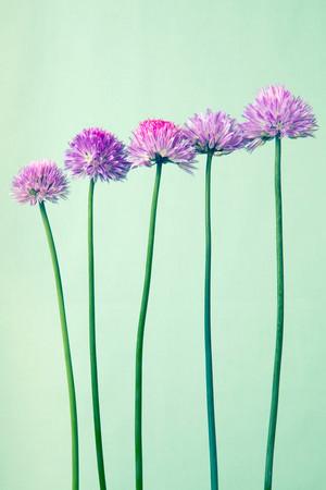 Pastel 꽃