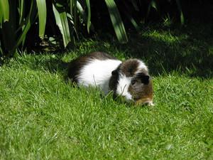 My Pig, स्नूपी