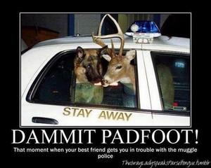 Dammit, Padfoot!   Via We 心 It