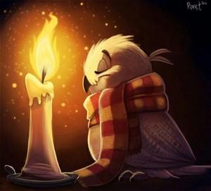 Hedwig art